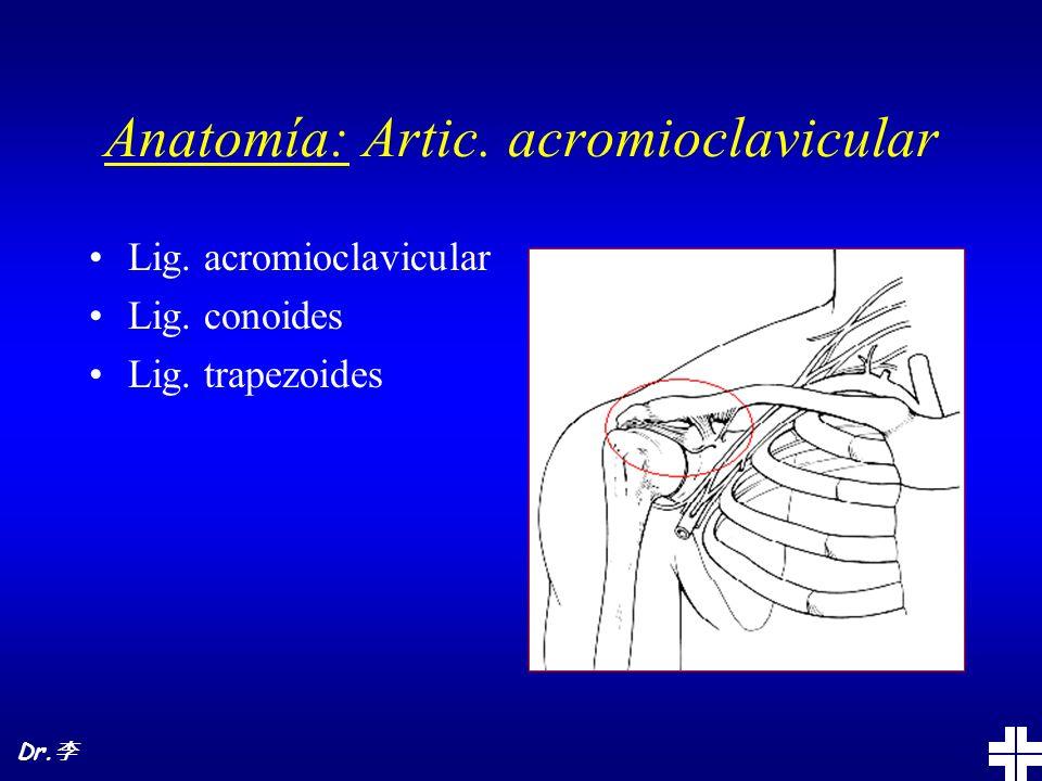 Anatomía: Artic. acromioclavicular