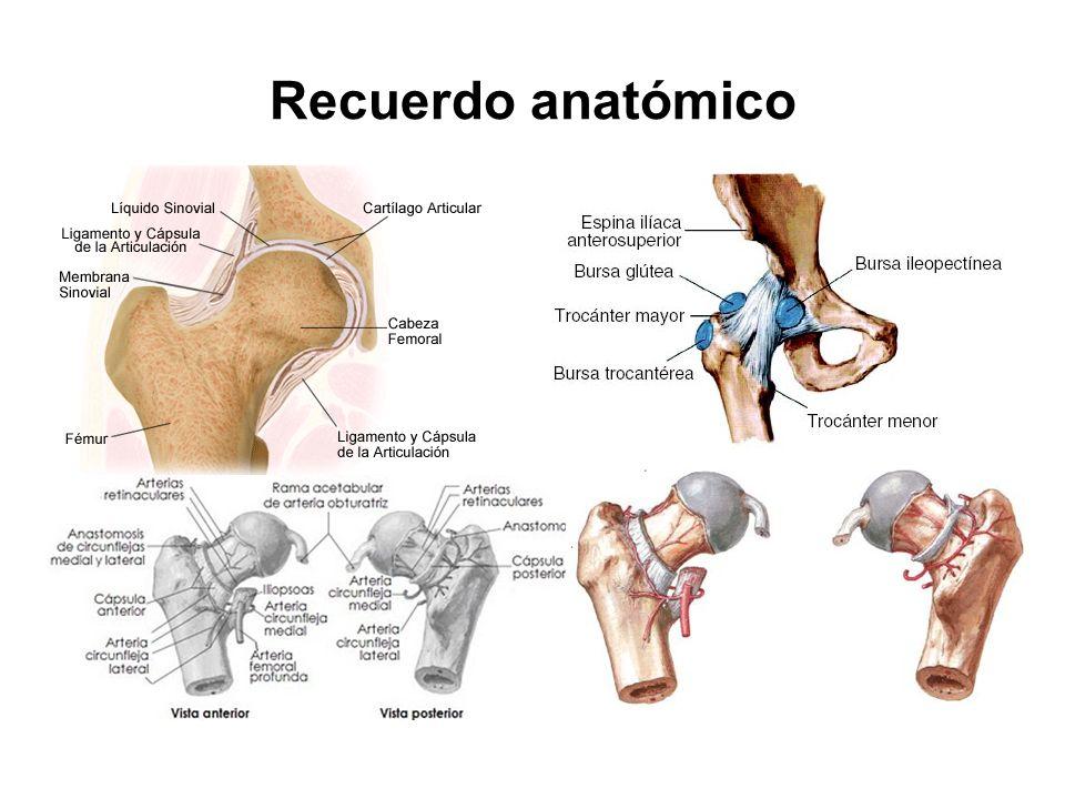Recuerdo anatómico