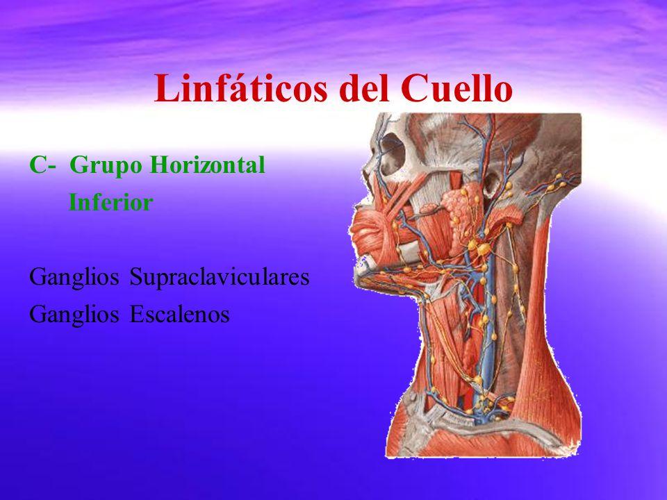 Linfáticos del Cuello C- Grupo Horizontal Inferior