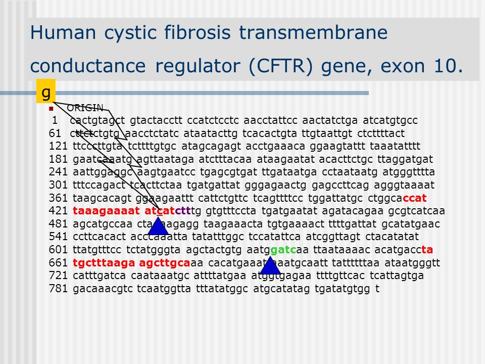 Human cystic fibrosis transmembrane conductance regulator (CFTR) gene, exon 10.