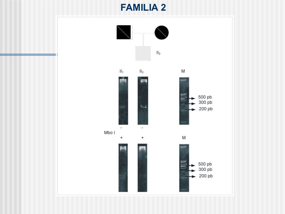 FAMILIA 2