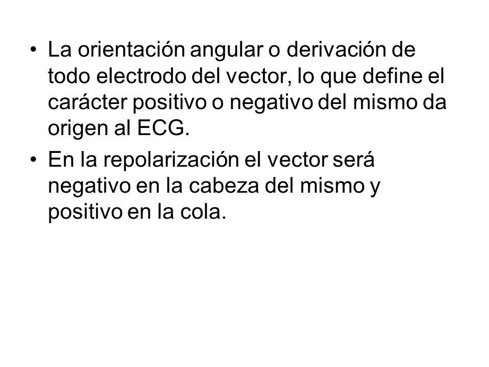 La orientación angular o derivación de todo electrodo del vector, lo que define el carácter positivo o negativo del mismo da origen al ECG.