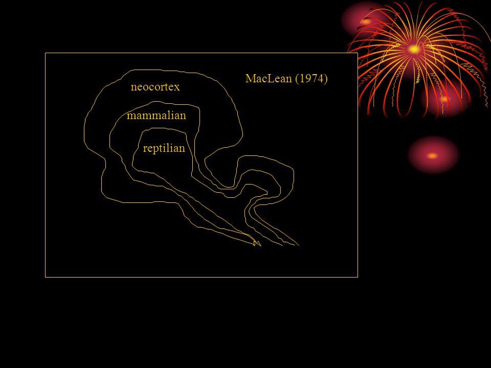 MacLean (1974) neocortex mammalian reptilian Herrmann (1996)