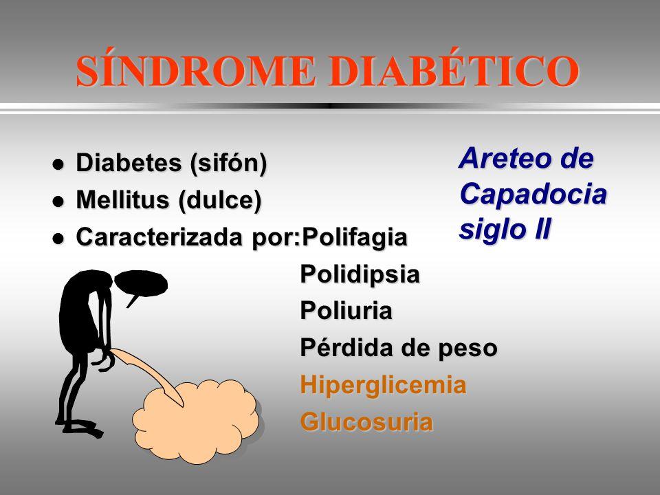 SÍNDROME DIABÉTICO Areteo de Capadocia siglo II Diabetes (sifón)
