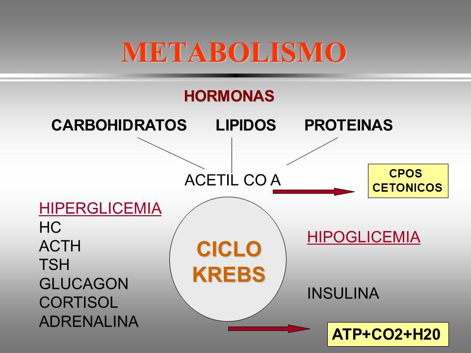 METABOLISMO CICLO KREBS HORMONAS CARBOHIDRATOS LIPIDOS PROTEINAS