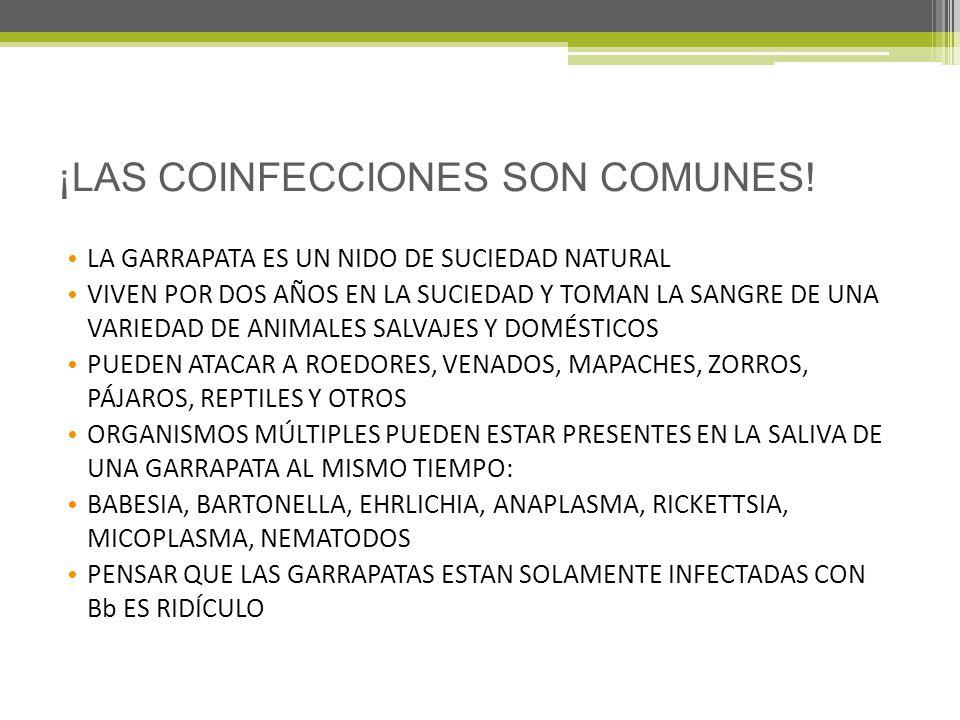 ¡LAS COINFECCIONES SON COMUNES!
