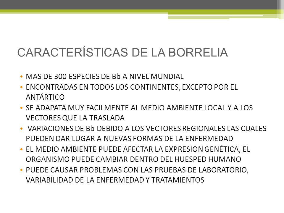 CARACTERÍSTICAS DE LA BORRELIA