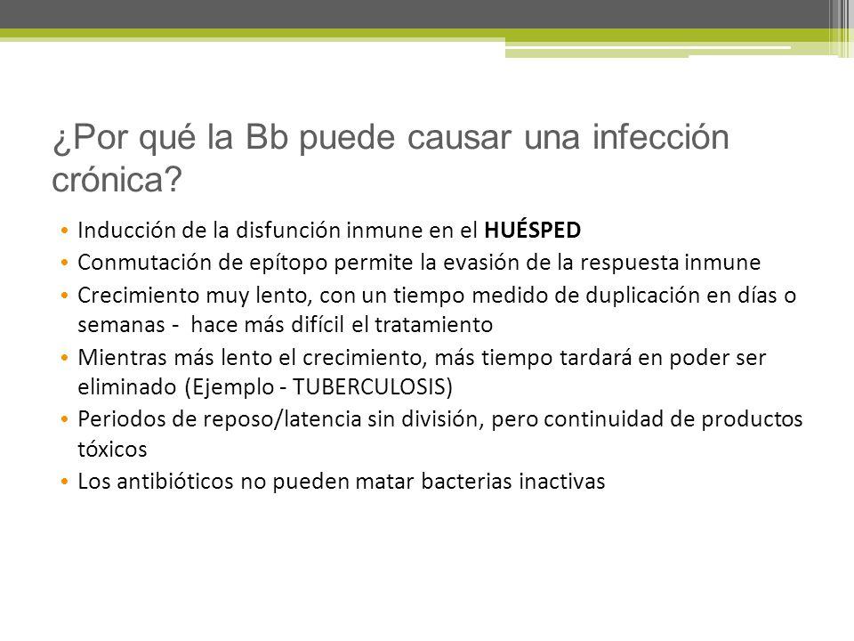 ¿Por qué la Bb puede causar una infección crónica