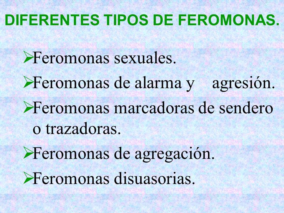DIFERENTES TIPOS DE FEROMONAS.