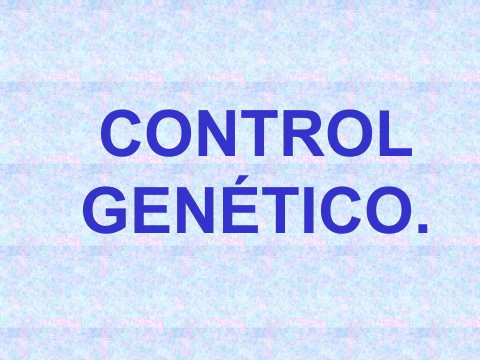 CONTROL GENÉTICO.
