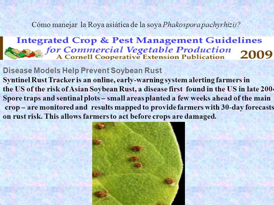 Cómo manejar la Roya asiática de la soya Phakospora pachyrhizi)
