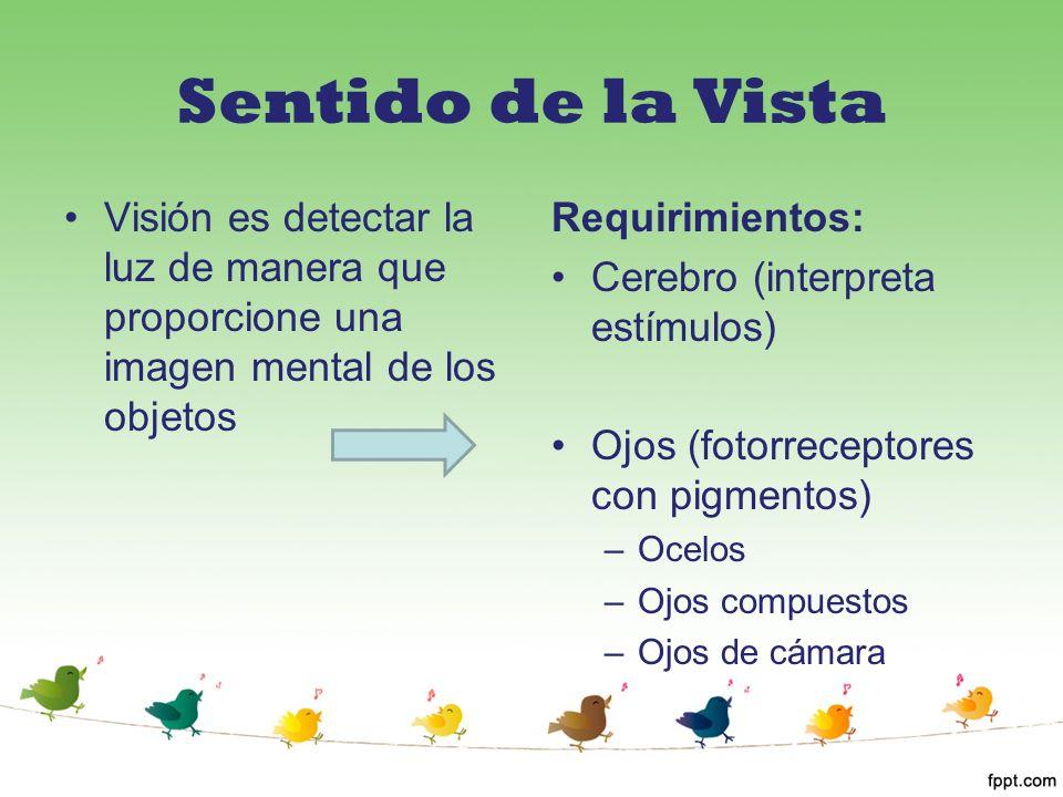 Sentido de la Vista Visión es detectar la luz de manera que proporcione una imagen mental de los objetos.