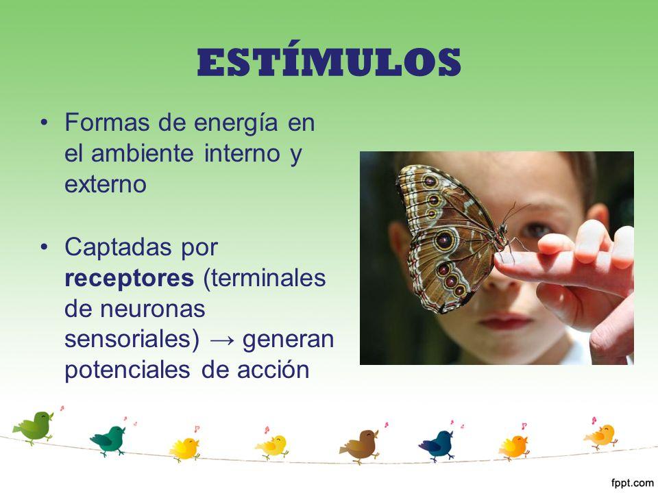 ESTÍMULOS Formas de energía en el ambiente interno y externo