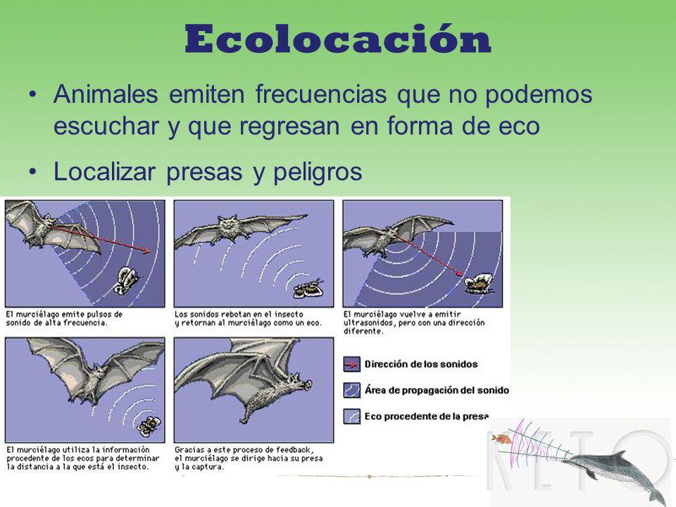 Ecolocación Animales emiten frecuencias que no podemos escuchar y que regresan en forma de eco.