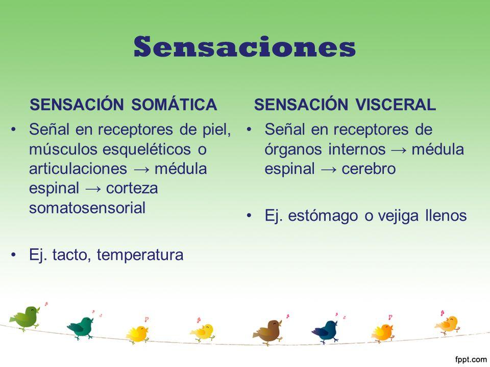 Sensaciones SENSACIÓN SOMÁTICA SENSACIÓN VISCERAL