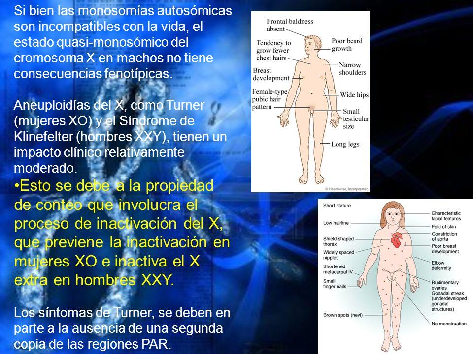 Si bien las monosomías autosómicas son incompatibles con la vida, el estado quasi-monosómico del cromosoma X en machos no tiene consecuencias fenotípicas.