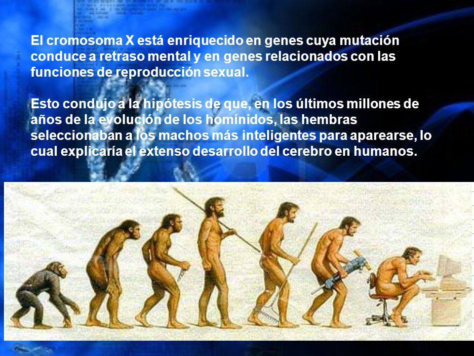 El cromosoma X está enriquecido en genes cuya mutación conduce a retraso mental y en genes relacionados con las funciones de reproducción sexual.