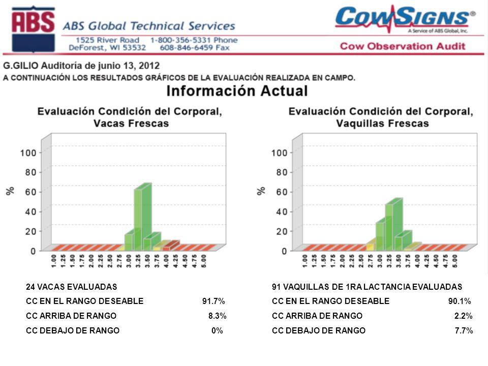 24 VACAS EVALUADAS CC EN EL RANGO DESEABLE 91.7% CC ARRIBA DE RANGO 8.3%