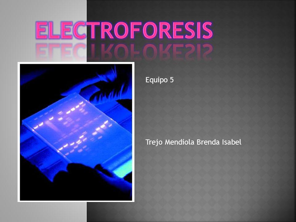 ELECTROFORESIS Equipo 5 Trejo Mendiola Brenda Isabel