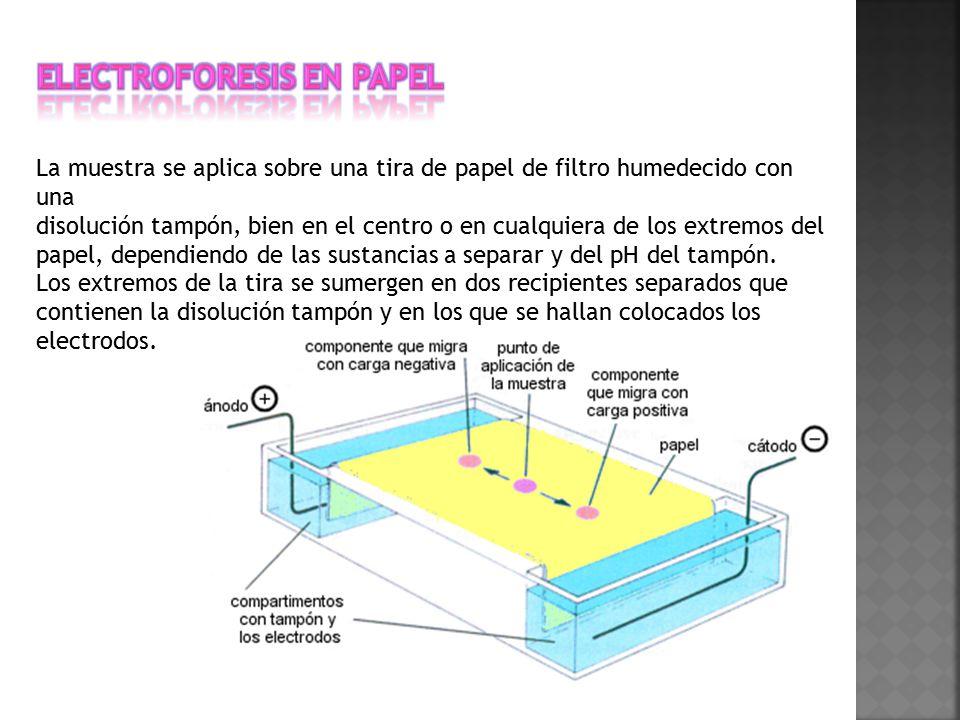 Electroforesis en papel