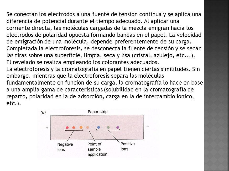 Se conectan los electrodos a una fuente de tensión continua y se aplica una diferencia de potencial durante el tiempo adecuado. Al aplicar una corriente directa, las moléculas cargadas de la mezcla emigran hacia los electrodos de polaridad opuesta formando bandas en el papel. La velocidad de emigración de una molécula, depende preferentemente de su carga. Completada la electroforesis, se desconecta la fuente de tensión y se secan las tiras sobre una superficie, limpia, seca y lisa (cristal, azulejo, etc...).