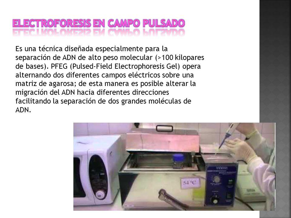 Electroforesis en campo pulsado