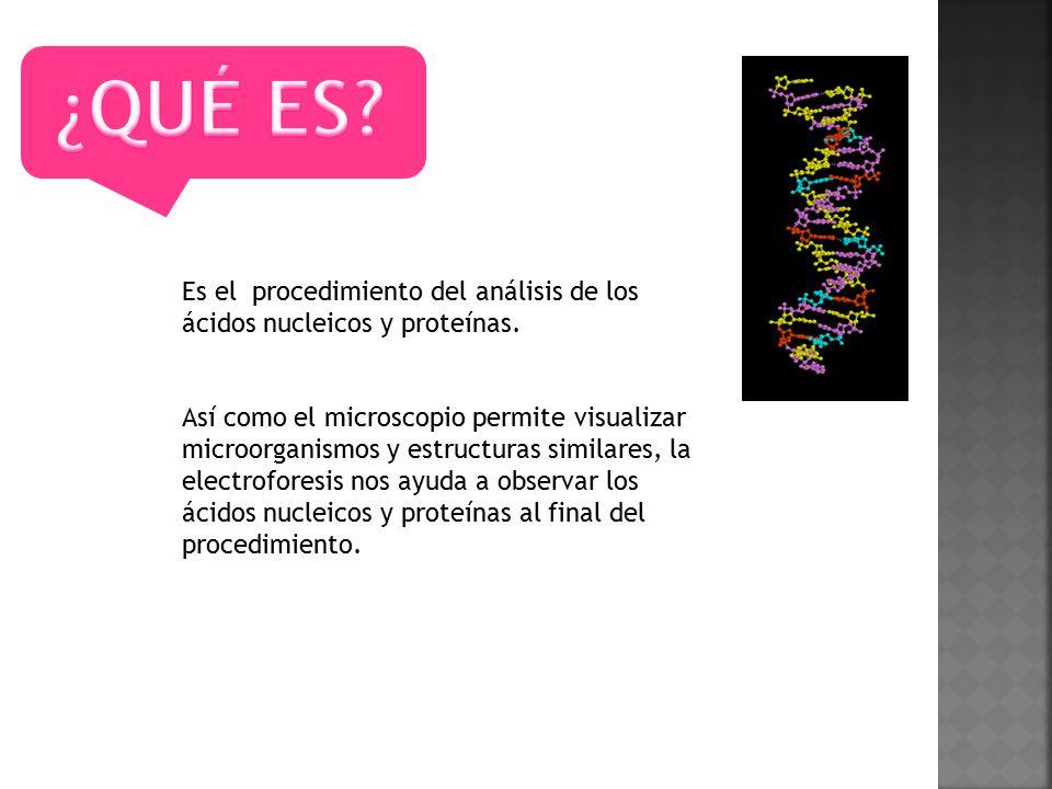 ¿QUÉ ES Es el procedimiento del análisis de los ácidos nucleicos y proteínas.