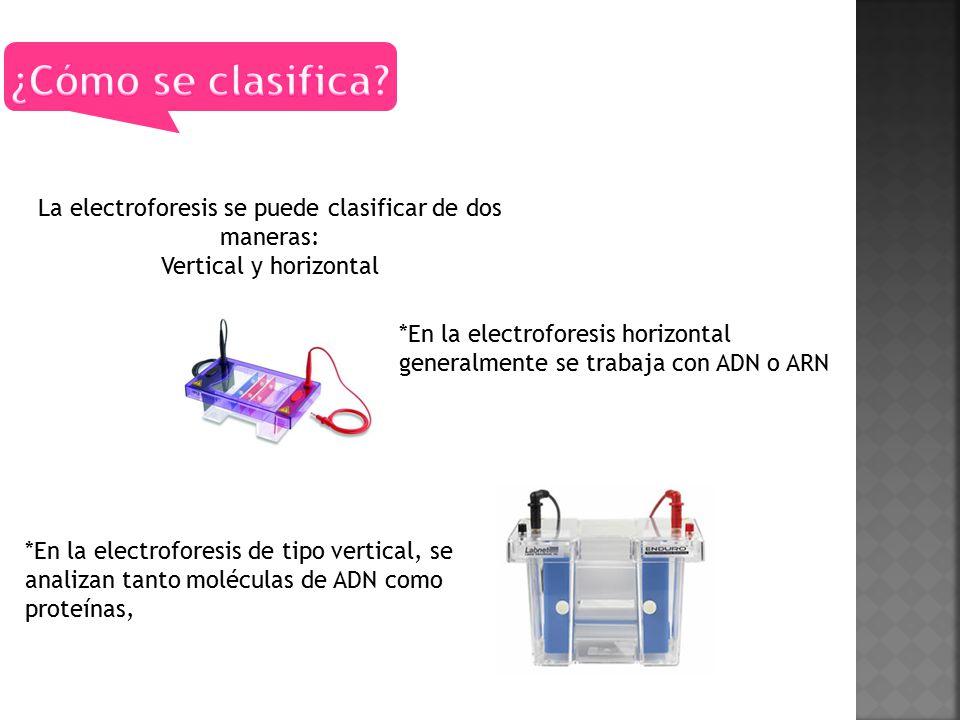 La electroforesis se puede clasificar de dos maneras: