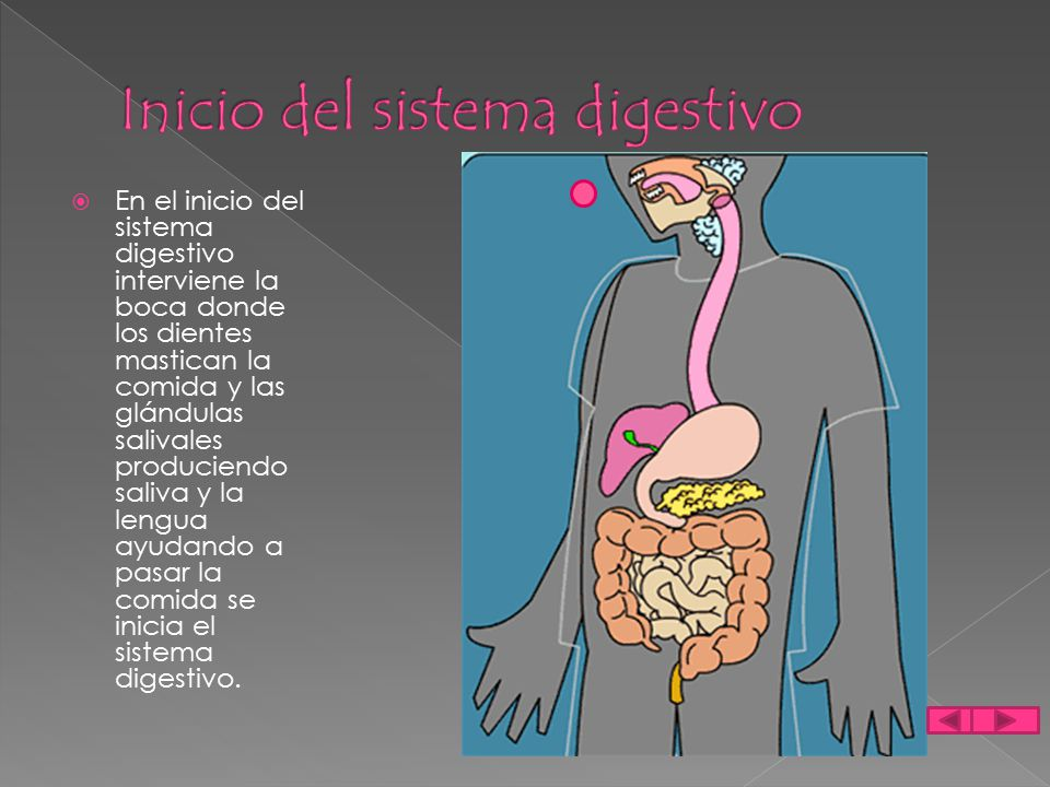 Inicio del sistema digestivo