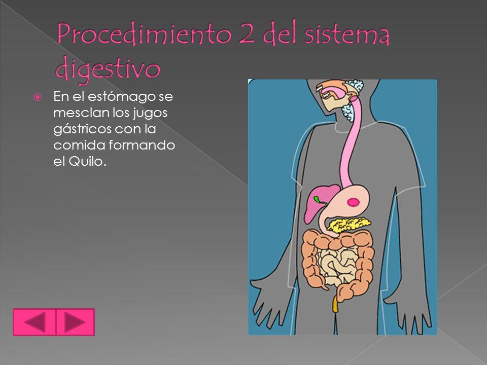 Procedimiento 2 del sistema digestivo
