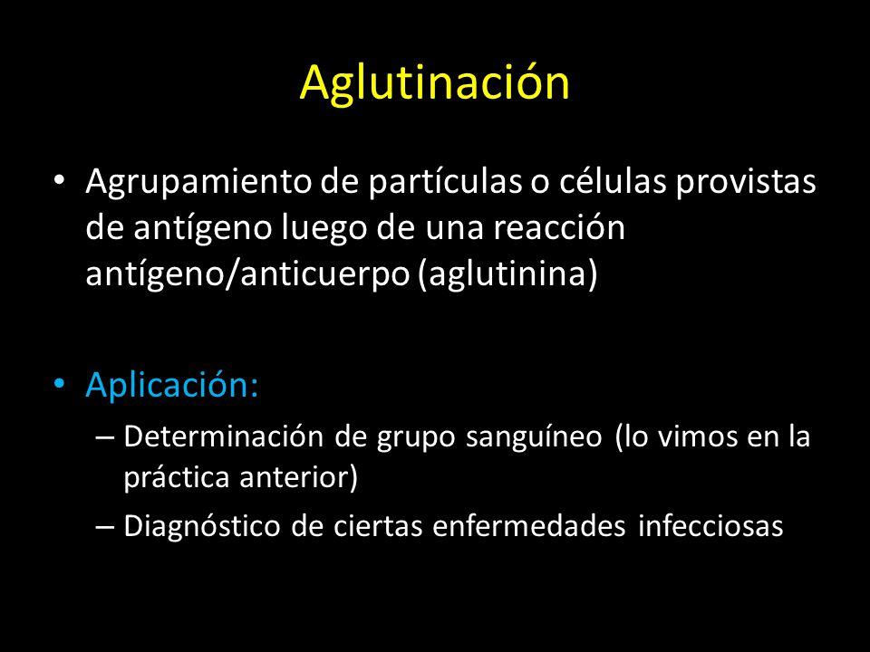 Aglutinación Agrupamiento de partículas o células provistas de antígeno luego de una reacción antígeno/anticuerpo (aglutinina)