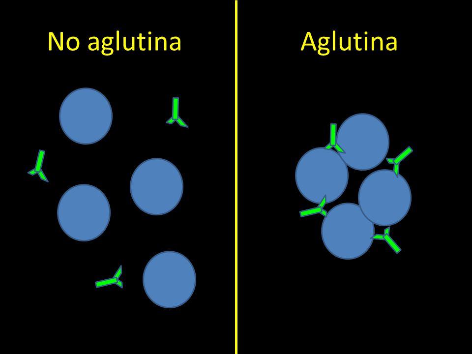 No aglutina Aglutina