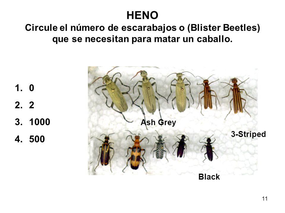 HENO Circule el número de escarabajos o (Blister Beetles) que se necesitan para matar un caballo.