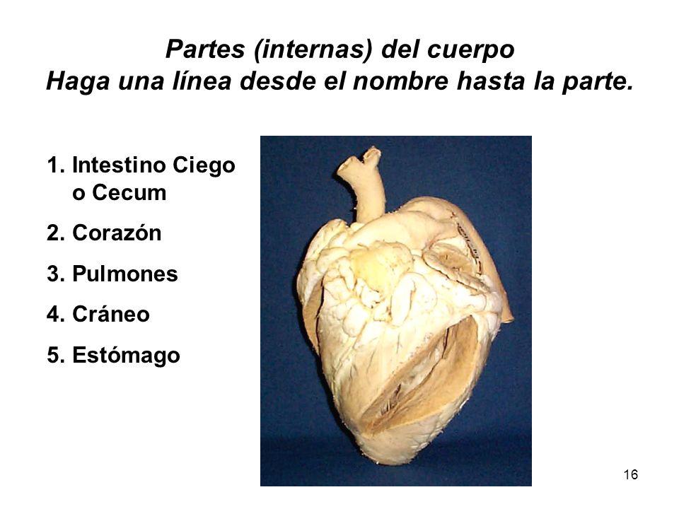 Partes (internas) del cuerpo Haga una línea desde el nombre hasta la parte.