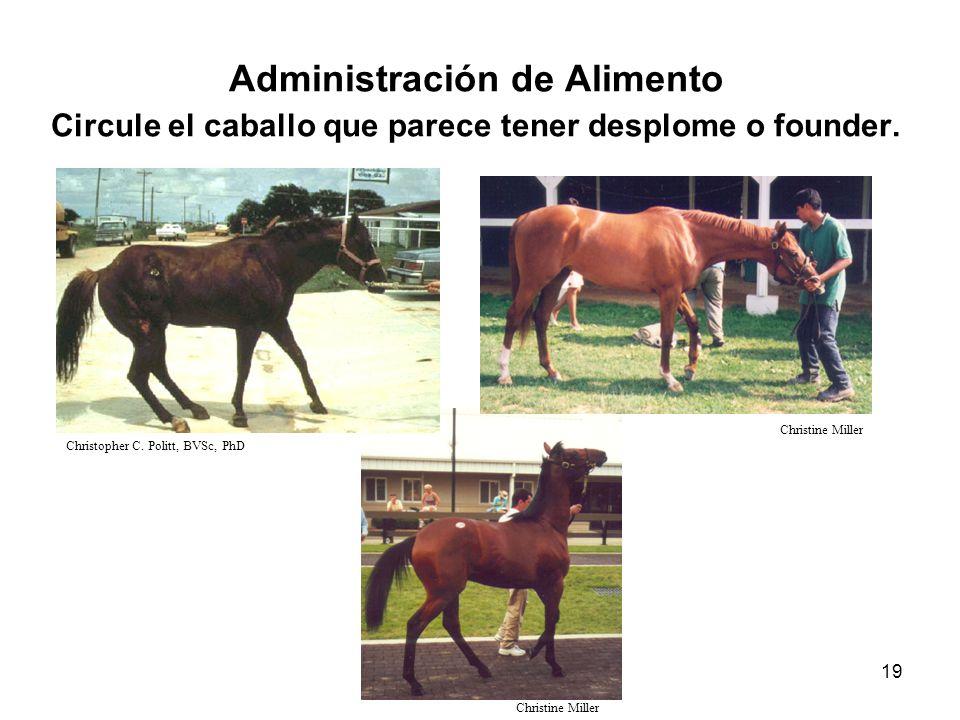 Administración de Alimento Circule el caballo que parece tener desplome o founder.
