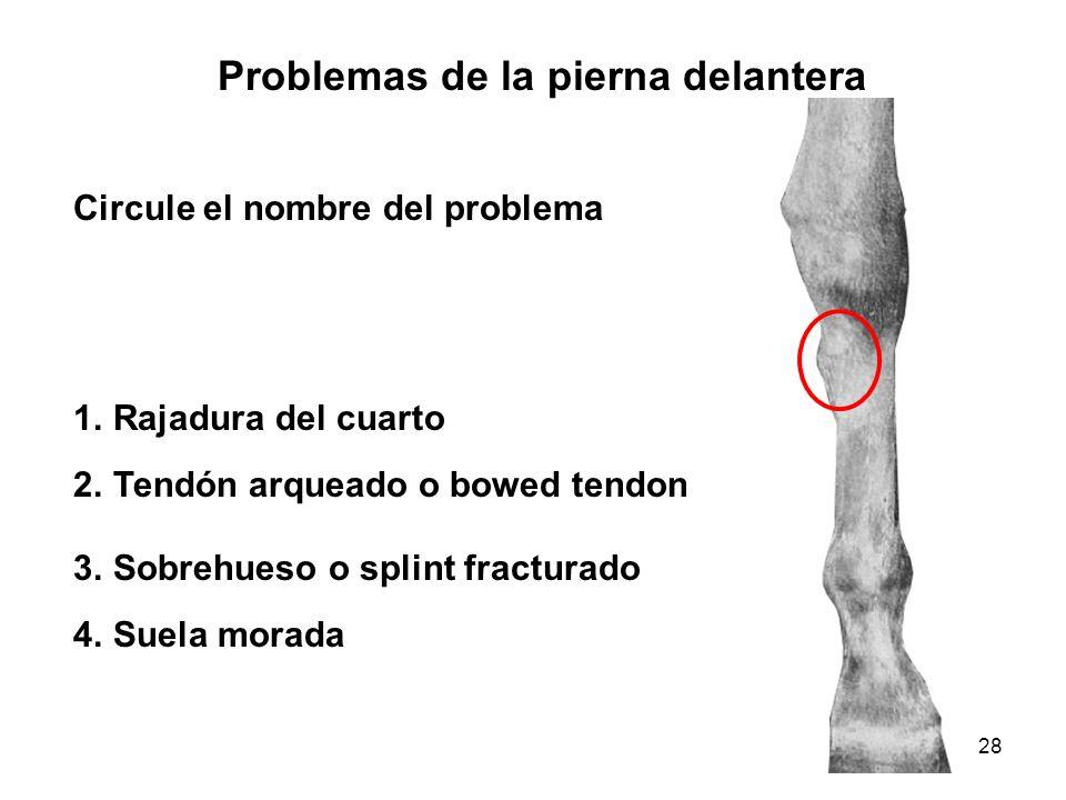 Problemas de la pierna delantera