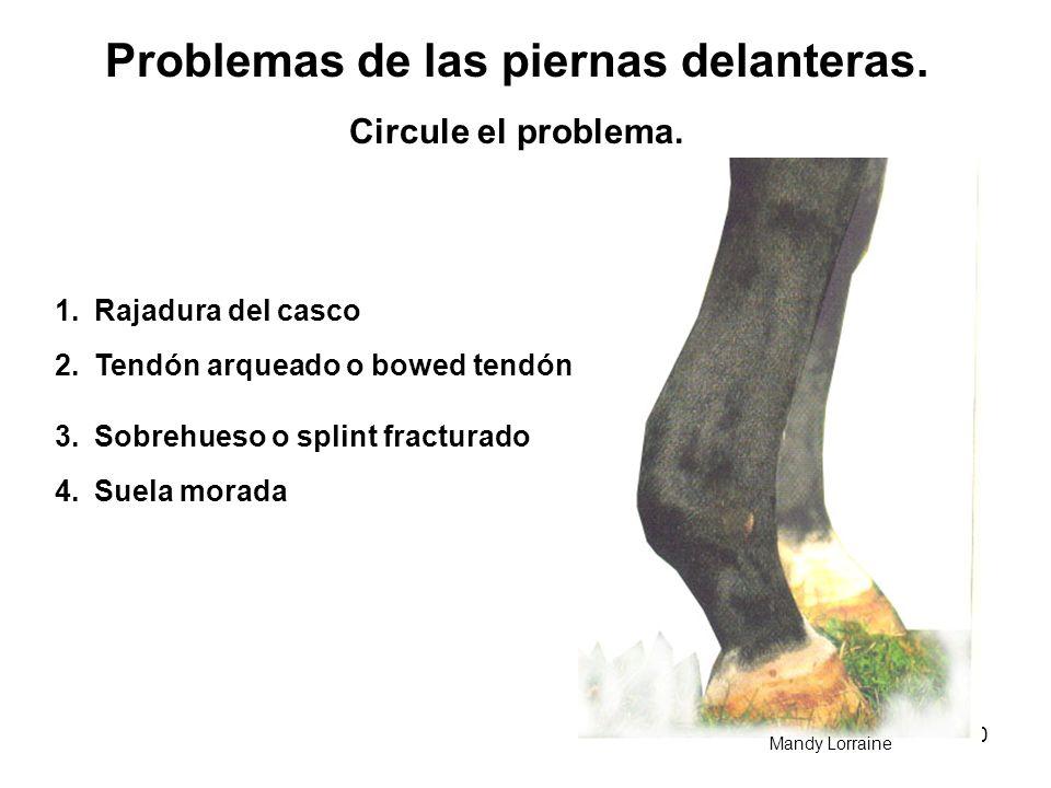Problemas de las piernas delanteras.