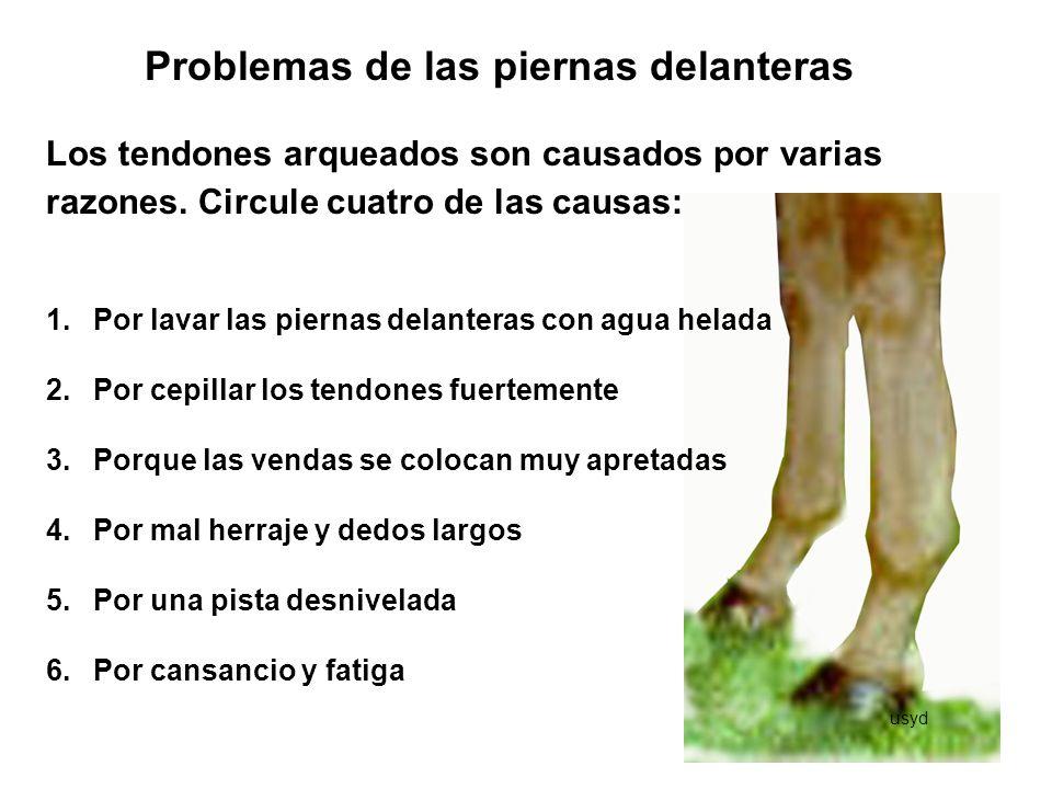 Problemas de las piernas delanteras