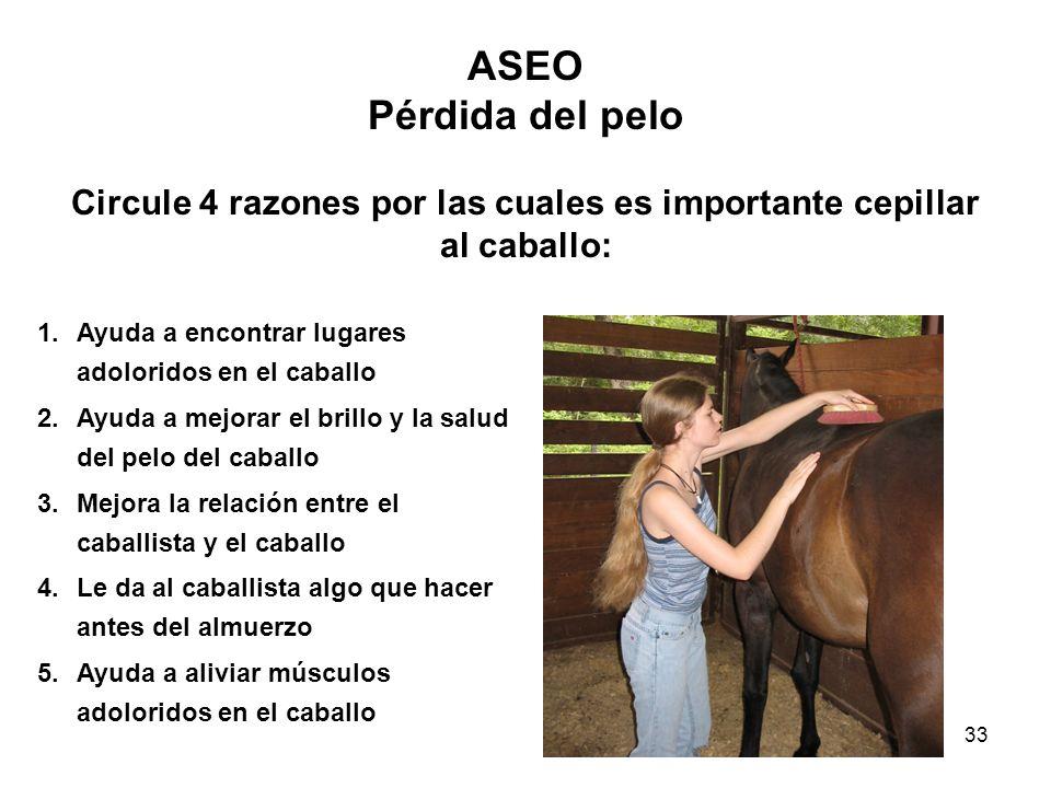 Circule 4 razones por las cuales es importante cepillar al caballo: