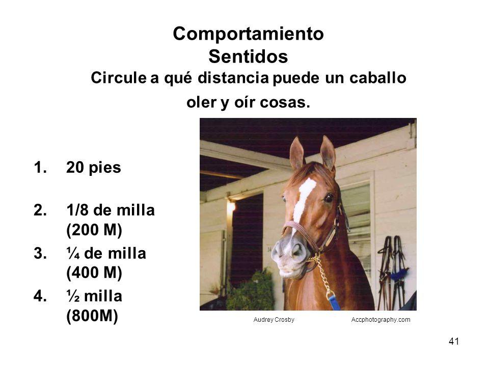 Comportamiento Sentidos Circule a qué distancia puede un caballo oler y oír cosas.