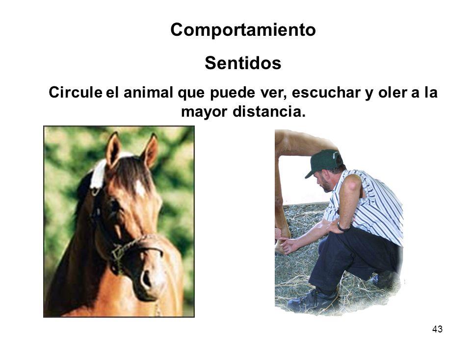 Circule el animal que puede ver, escuchar y oler a la mayor distancia.