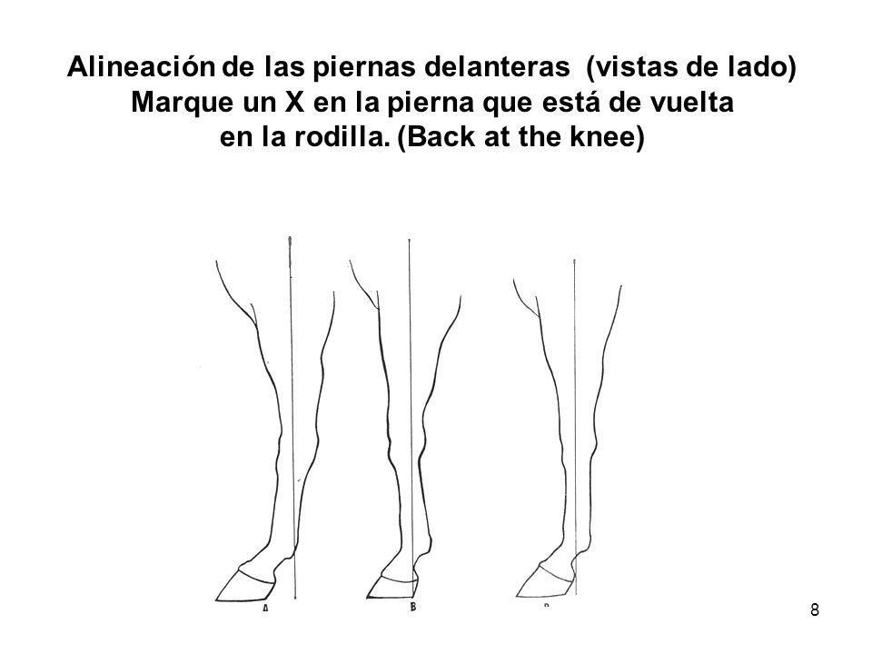 Alineación de las piernas delanteras (vistas de lado)