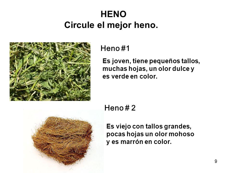 HENO Circule el mejor heno.