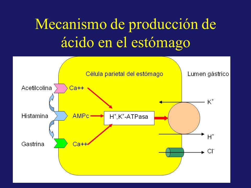 Mecanismo de producción de ácido en el estómago