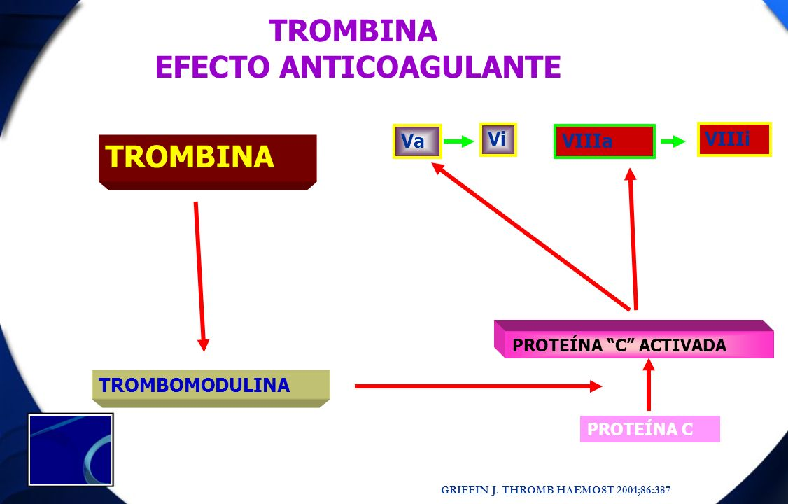 EFECTO ANTICOAGULANTE