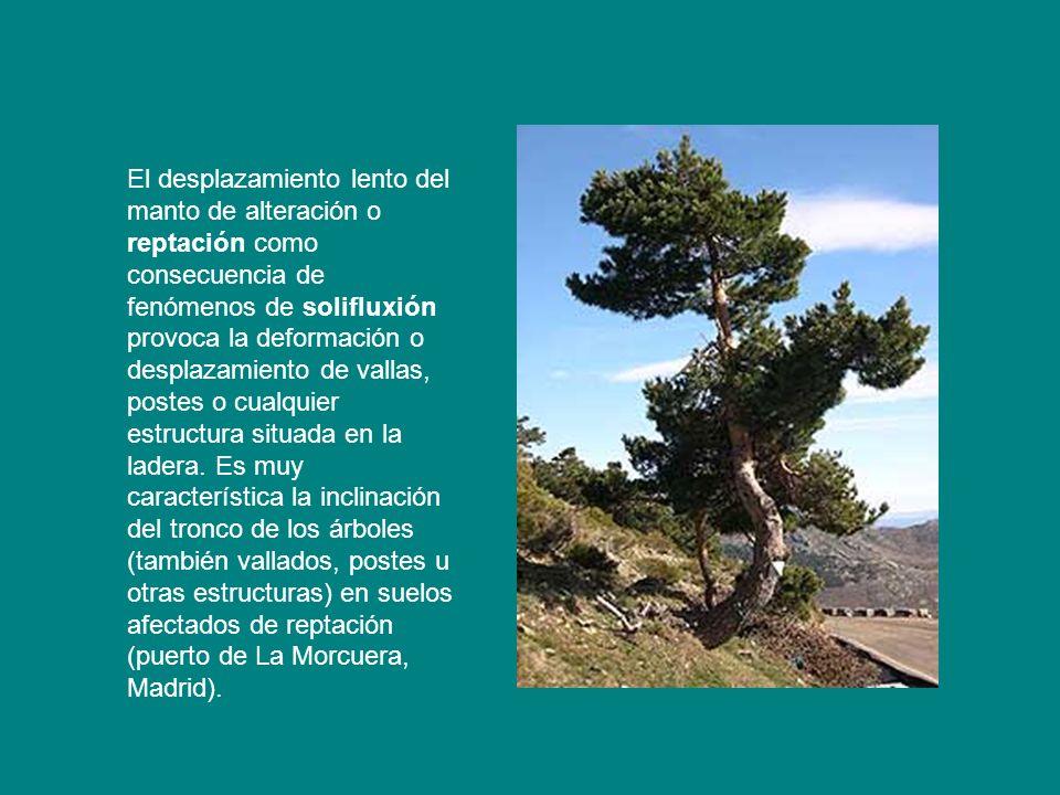 El desplazamiento lento del manto de alteración o reptación como consecuencia de fenómenos de solifluxión provoca la deformación o desplazamiento de vallas, postes o cualquier estructura situada en la ladera.