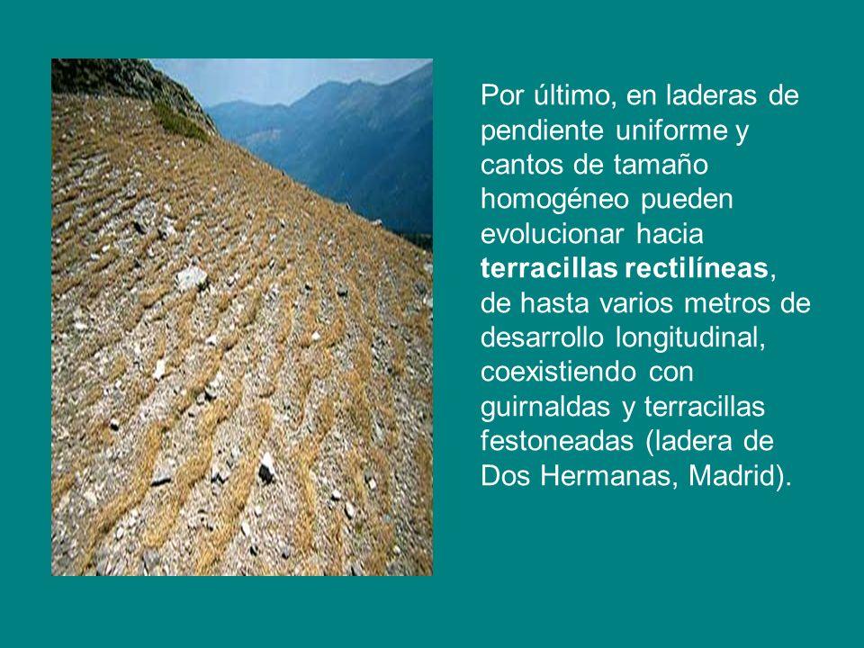 Por último, en laderas de pendiente uniforme y cantos de tamaño homogéneo pueden evolucionar hacia terracillas rectilíneas, de hasta varios metros de desarrollo longitudinal, coexistiendo con guirnaldas y terracillas festoneadas (ladera de Dos Hermanas, Madrid).