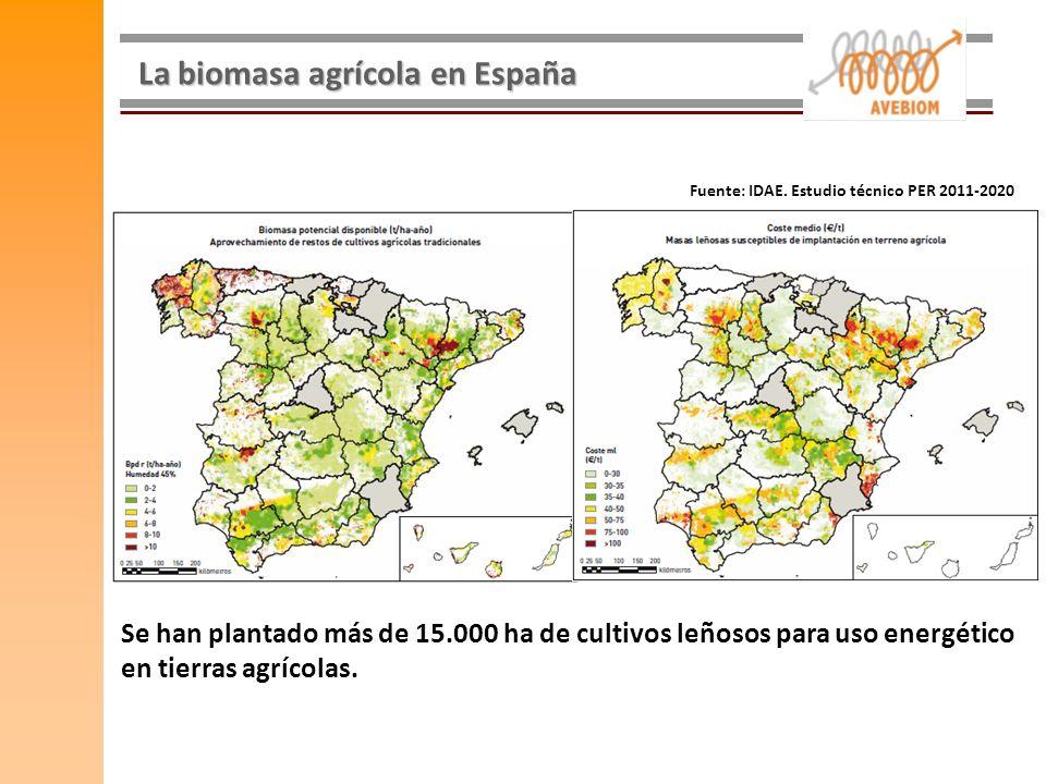 La biomasa agrícola en España