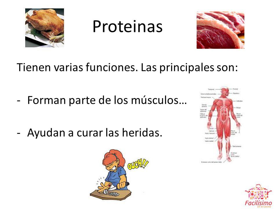 Proteinas Tienen varias funciones. Las principales son: