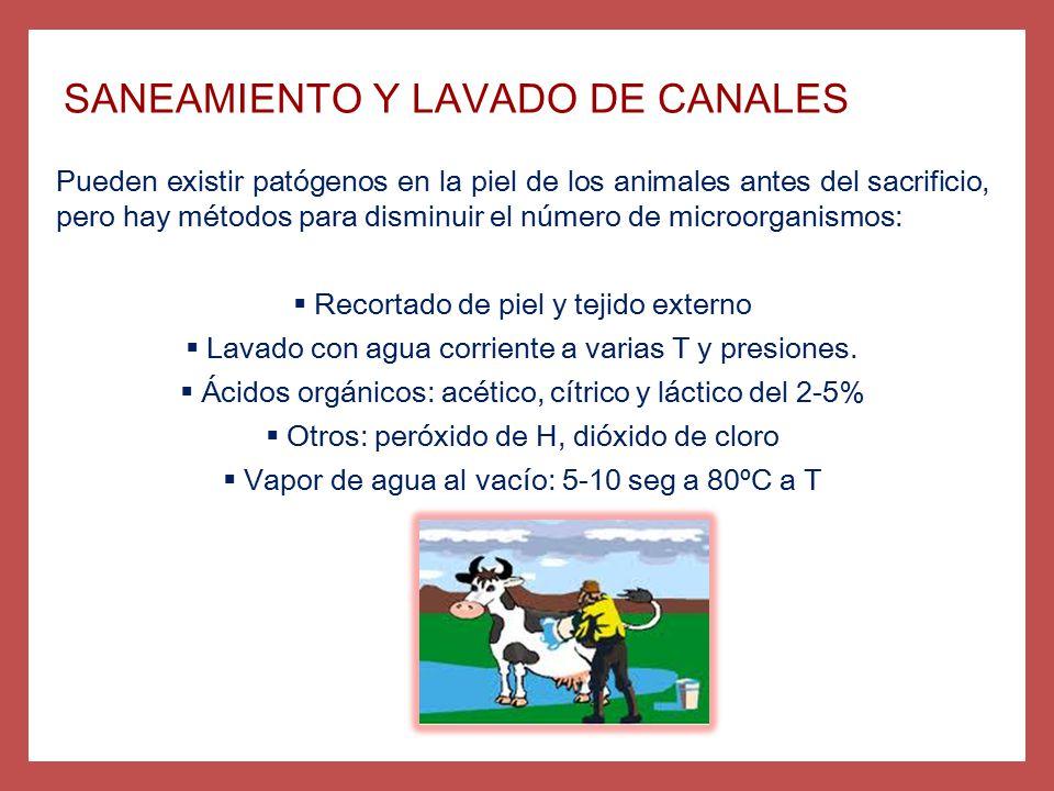 SANEAMIENTO Y LAVADO DE CANALES